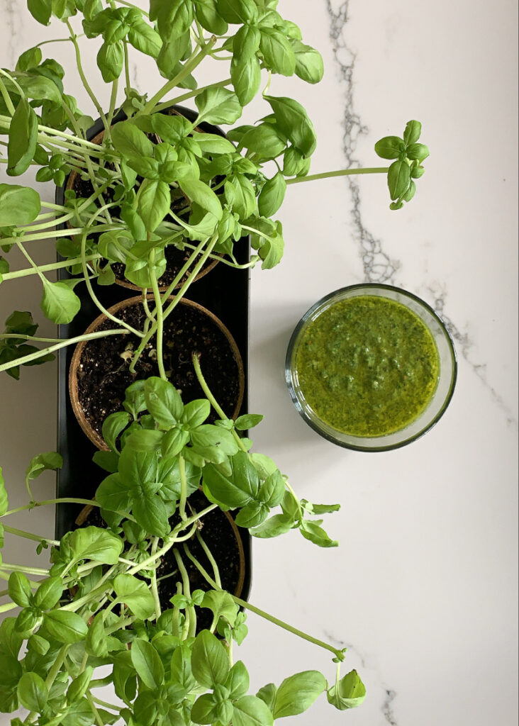 Top down view of a bowl of green pesto and three basil plants.